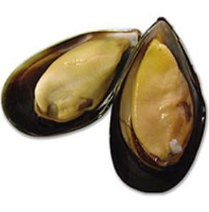 Baitbox Sea Bait Mussel